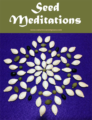 Seed Meditation